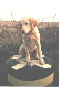 Marker for the monitoring of foreshore levels, plus dog